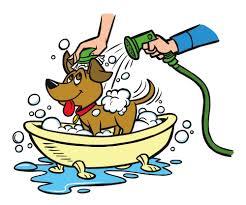Phiếu đăng kí tắm cho chó mèo