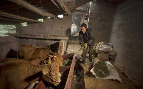 Viettel và chương trình hỗ trợ vật nuôi lớn nhất từ trước đến nay