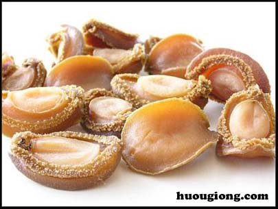 Quy trình sản xuất giống bào ngư HALIOTIS OLIVA tại Việt Vam