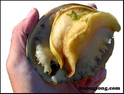 Quy trình sản xuất giống bào ngư của Nhật Bản