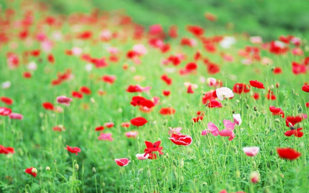 Hương hoa cỏ Floral