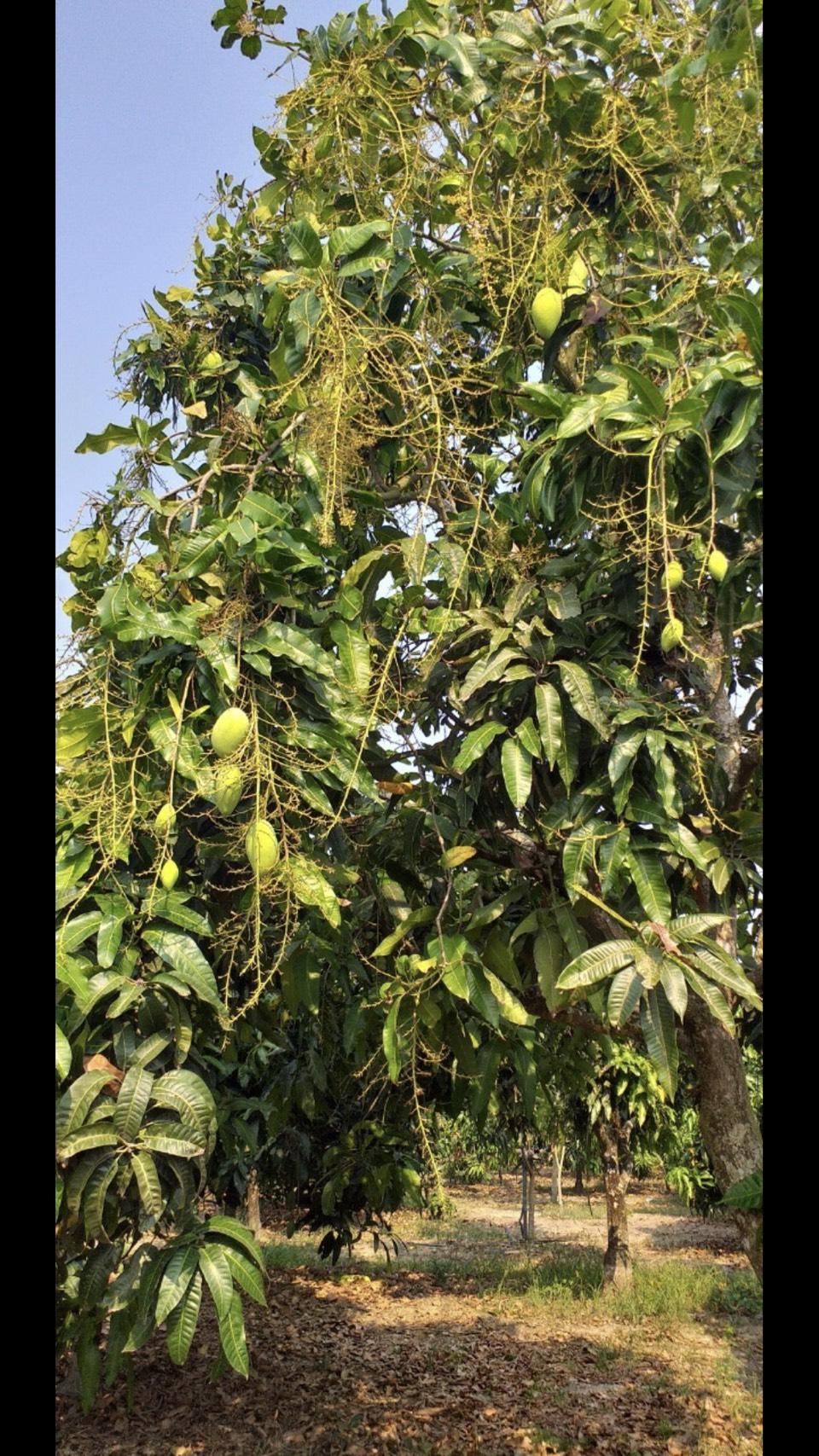 Bán Đất Vườn Phú Lý, Vĩnh Cửu 22.000m Giá 3,3 tỷ