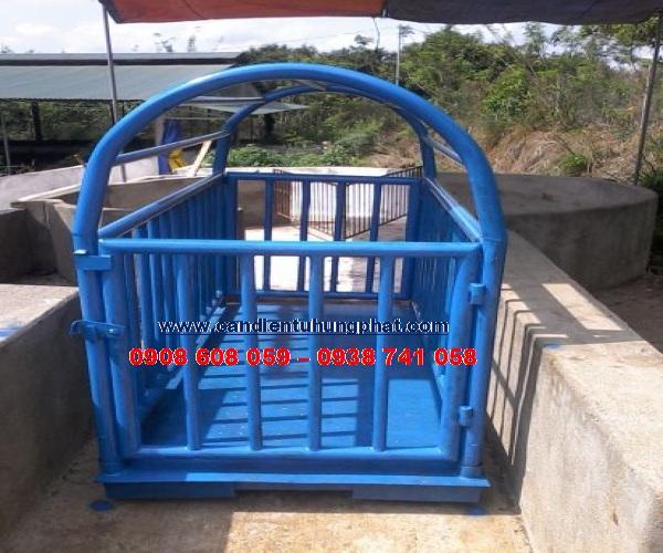 Cân heo điện tử 500kg, Thơ 0908608059