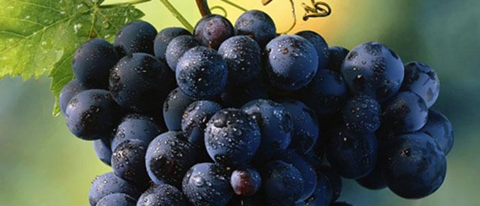Nho là loại hoa quả giàu dinh dưỡng nhiều người yêu thích