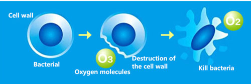 Khí ozone làm sạch bề mặt của hoa quả