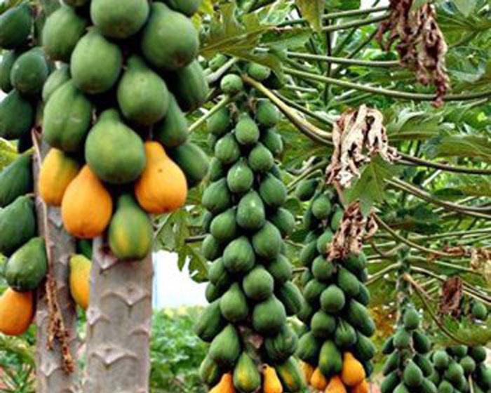 Dùng ozone bảo quản trái cây