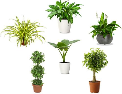 Những cây cảnh trong nhà giúp lọc không khí