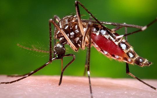 6 loại cây cảnh trồng trong nhà có tác dụng đuổi muỗi