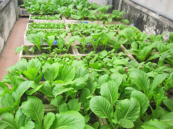Chia sẻ bí quyết trồng rau sạch tại nhà ai cũng cần biết