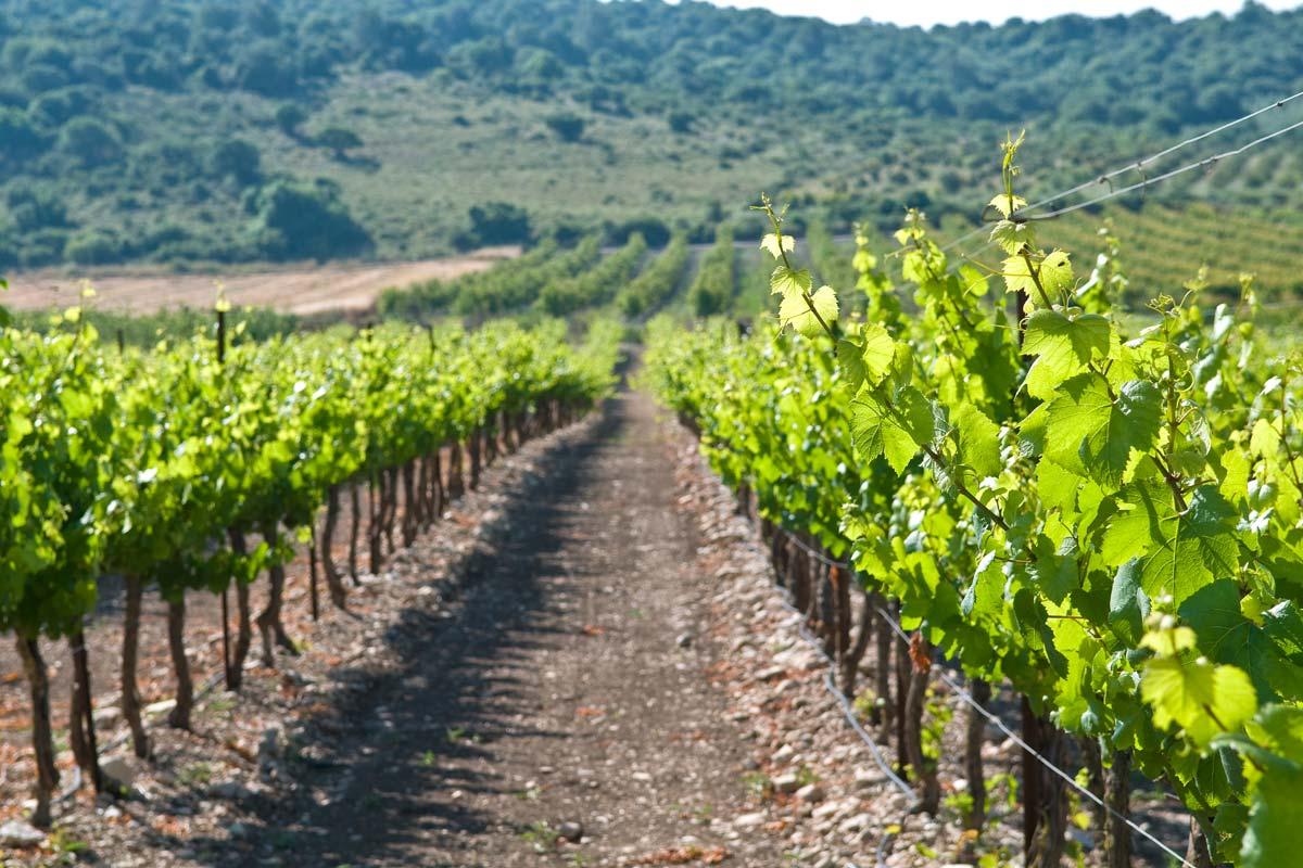 Lý do khiến nền nông nghiệp công nghệ cao Israel khiến cả thế giới ngưỡng mộ