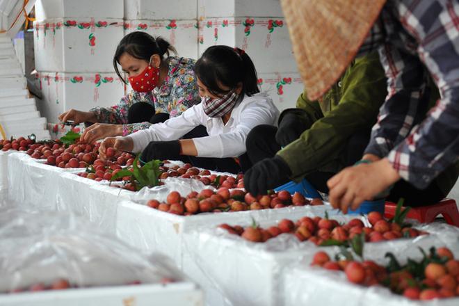 Xử lý nông sản sau thu hoạch