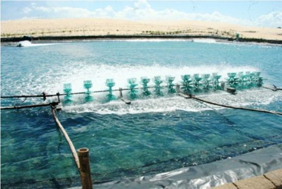Khí ozone cứu cánh ngành nuôi trồng thủy sản