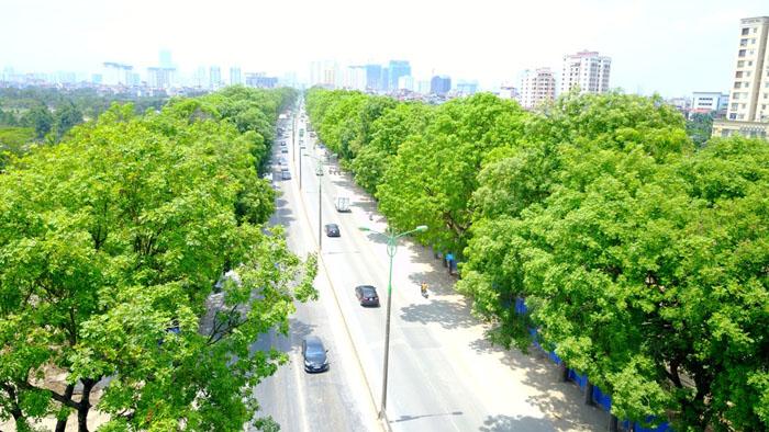 ozone nồng độ cao ảnh hưởng cả đến cây xanh
